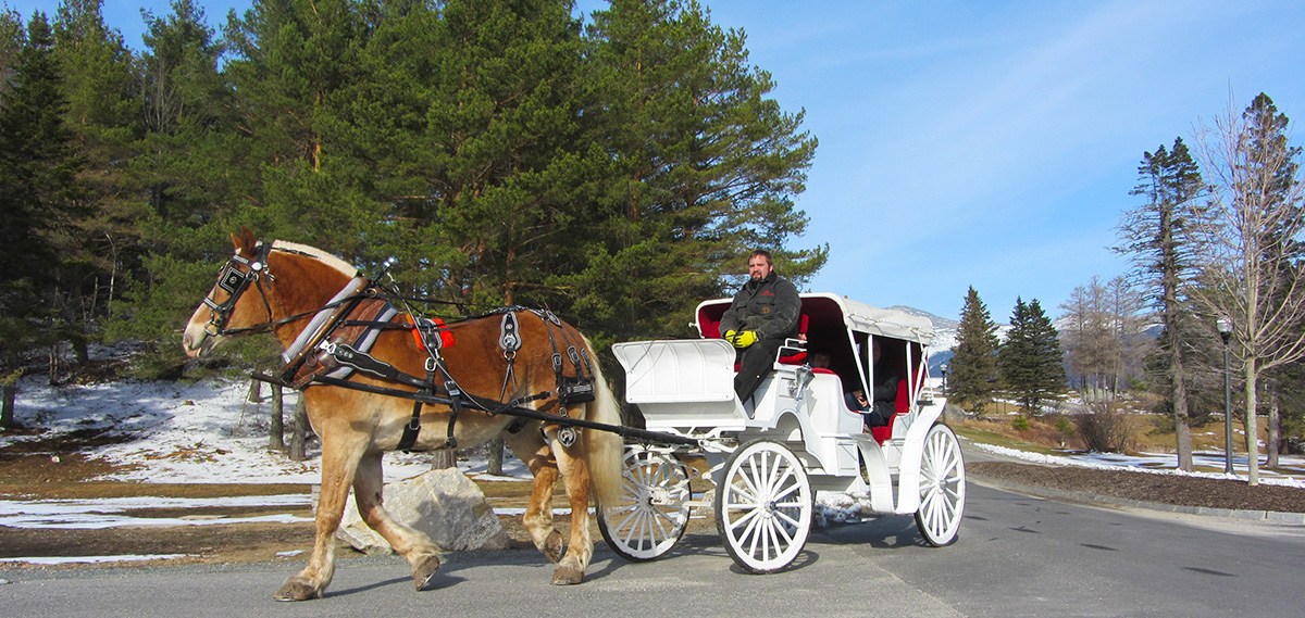 Horse Drawn Carriage And Sleigh Rides At Bretton Woods Mount Washington Resort