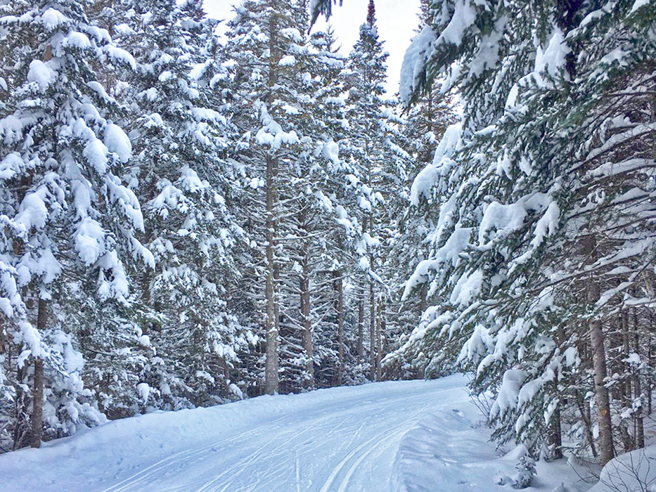 Nordic trails are in primo shape and the network is 100% OPEN!