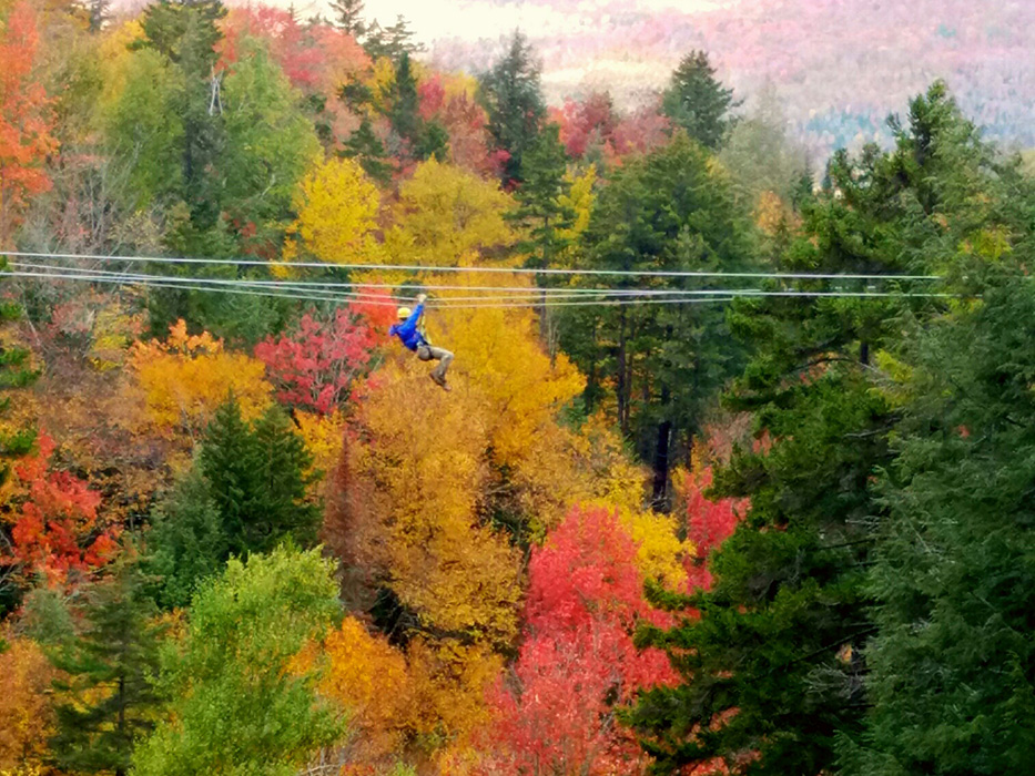 View the foliage from a different perspective on a canopy tour.